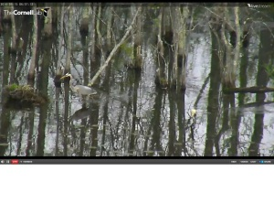 Heron on Sapsucker Pond