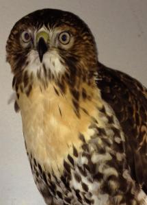Bird Cam Photo of Cornell E3